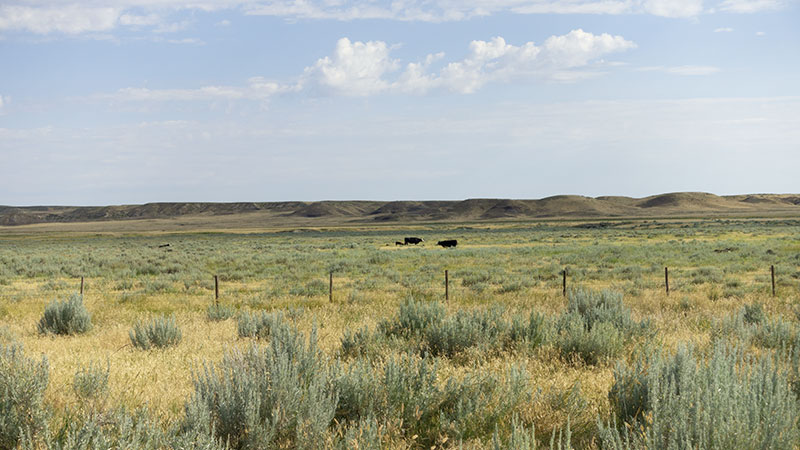4-square-ranch-ground_7-25-2018_059_800-wide