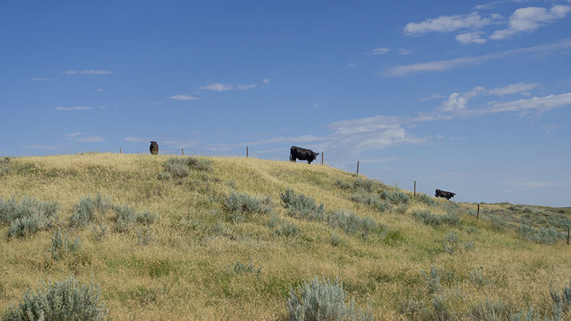 4-square-ranch-ground_7-25-2018_060_800-wide