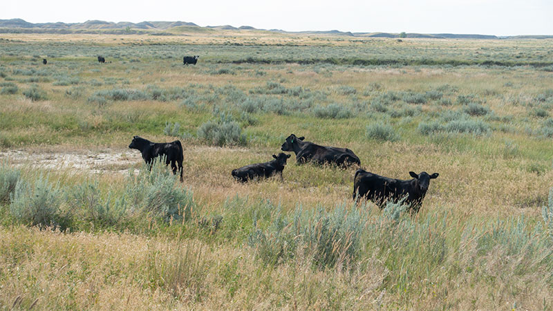 4-square-ranch-ground_7-25-2018_074_black-added_800-wide
